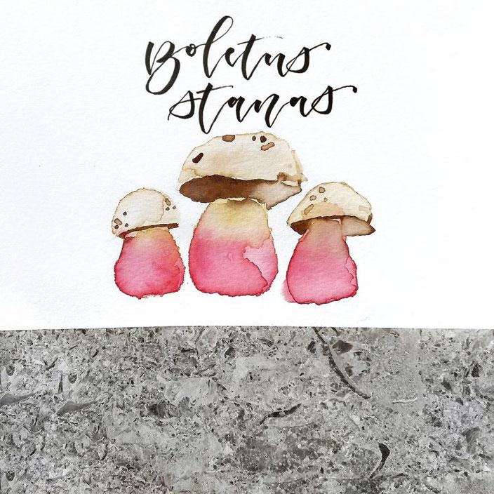 boletus stanas - Handlettering mit Aquarell Pilzen