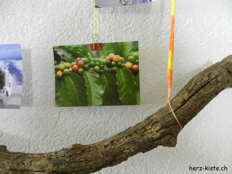Detailaufnahme - Fotos an Ästen aufgehängt
