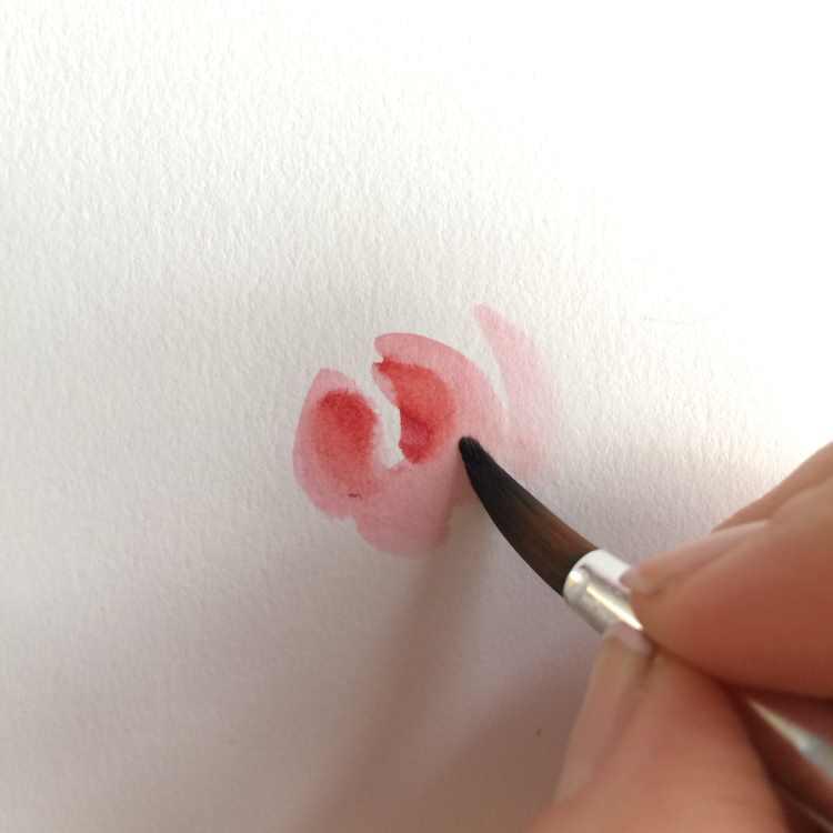 Anfang um eine Rose zu malen