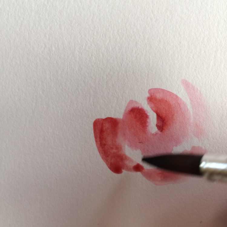 Innenleben einer Rose gemalt