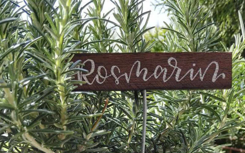 Rosmarin - selbstgemachtes Kräuterschild mit Handlettering
