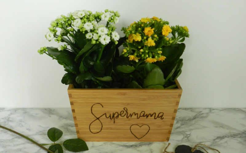 Geschenkidee zum Muttertag: Blumentopf mit Handlettering