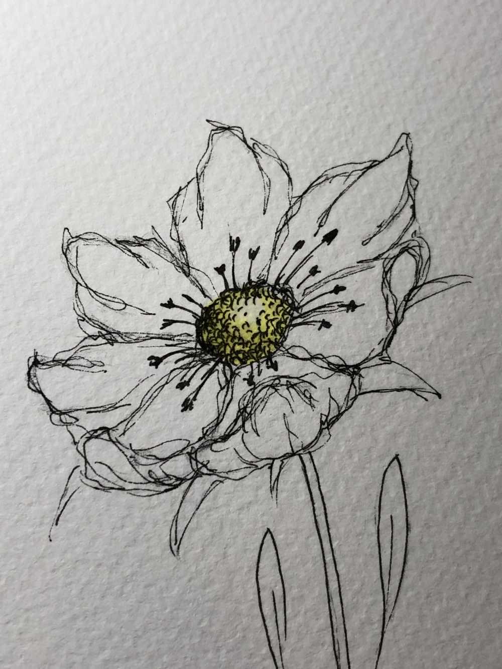 Blumenblüte mit der Ellipsentechnik gezeichnet und wenig ausgemalt