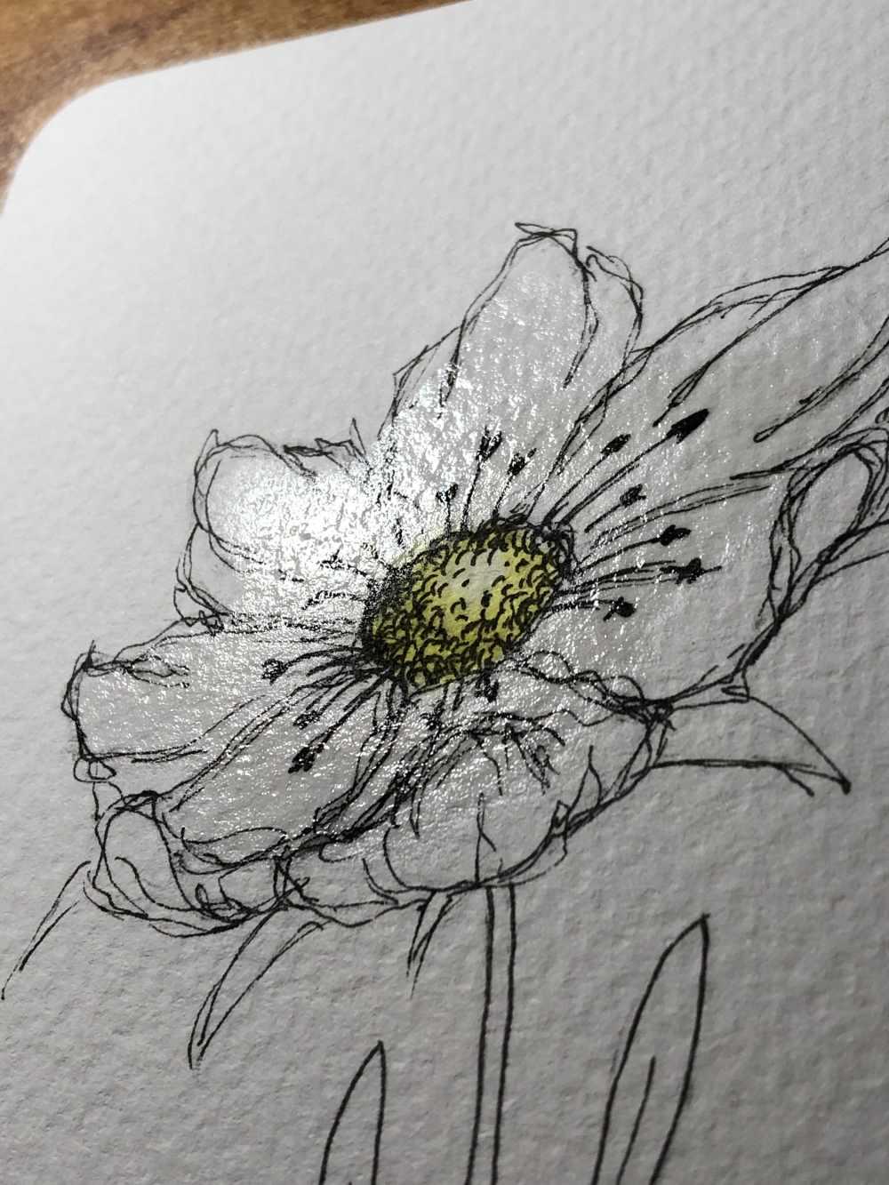 Blumenblüte nass um zu kolorieren